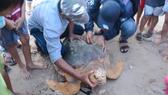 Con rùa biển đang được kiểm tra sức khỏe trước khi được thả về với biển.