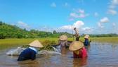 ĐBSCL giảm trồng lúa để phù hợp với biến đổi khí hậu
