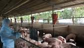 Phấn đấu năm 2030, ngành chăn nuôi xuất khẩu 15-30% sản phẩm chăn nuôi