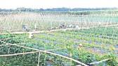 Việt Nam đầu tư công nghệ vào Campuchia phát triển nông nghiệp