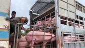 Thêm 1.000 con heo thịt từ Thái Lan nhập về Đồng Nai