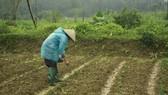 nông dân gặp khó vì trời lạnh kéo dài