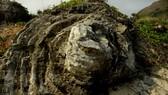 vẻ đẹp san hô hóa thạch ngàn năm