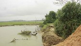 Quảng Ngãi: Không thể gieo sạ vụ mới vì đê sông sạt lở