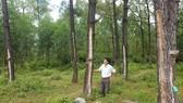 Hỗ trợ các hộ trồng rừng hướng tới cấp chứng chỉ rừng