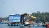 Giải quyết dứt điểm nuôi cá lồng bè tự phát tại khu vực biển và sông Trà Bồng (Quảng Ngãi)