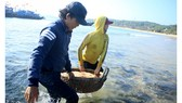 Ngư dân Quảng Ngãi trúng đậm mùa ruốc biển