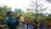 Quảng Ngãi: Nhộn nhịp chợ hoa sớm, hội xuân khai mở