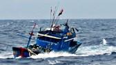 Biên phòng Lý Sơn (Quảng Ngãi) cứu ngư dân tàu cá bị phá nước chìm giữa biển