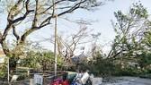 Quảng Ngãi: Rau màu ngập trong nước, nhà cửa tốc mái, sập đổ