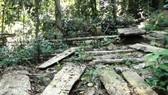 Quảng Ngãi: Xử phạt hành chính 3 cá nhân phá rừng trái phép hơn 230 triệu đồng và yêu cầu trồng lại rừng đã phá