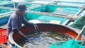 Quảng Ngãi xây dựng chương trình phát triển thủy sản bền vững