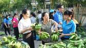 Nông sản lại rớt giá vì thiếu thông tin thị trường