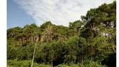 Đến năm 2020, diện tích rừng đạt 14,4 triệu ha