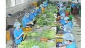 Vai trò liên kết trong sản xuất nông nghiệp công nghệ cao