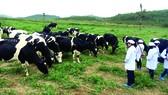 Đa dạng hóa giải pháp để đạt mục tiêu xuất khẩu nông nghiệp