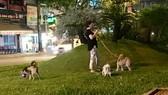Chó vẫn thả rông nơi công cộng