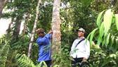 Định vị để bảo tồn, lưu giữ giống quế mẹ bản địa ở Trà Bồng, Quảng Ngãi. Ảnh: NGỌC OAI