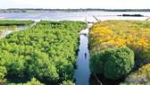 Rú Chá, viên ngọc xanh bảo tồn đa dạng sinh học giữa phá Tam Giang