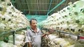 859 tỷ đồng hỗ trợ nông dân phát triển kinh tế