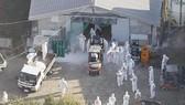 Các nhân viên trong trang phục bảo hộ tiến hành tiêu hủy hàng nghìn con gà tại trang trại ở Kobayashi, tỉnh Miyazaki, Nhật Bản, ngày 8-12, sau khi phát hiện cúm gia cầm. Ảnh: Kyodo/TTXVN