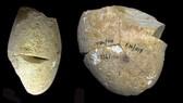Công cụ mài bằng đá có niên đại khoảng 350.000 năm