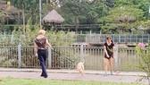 Ngăn ngừa tai nạn do chó thả rông
