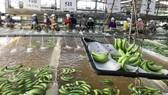 Giảm cao su, tăng diện tích cây trồng giá trị nhờ ứng dụng công nghệ cao