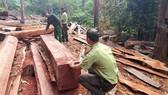 Tây Nguyên nỗ lực giữ rừng