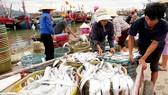 Nhộn nhịp làng biển Quảng Bình