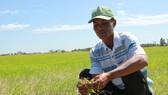 Cái Tết buồn của nông dân sản xuất lúa vụ 3