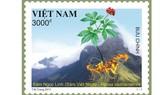 Chính thức phát hành bộ tem Sâm Ngọc Linh