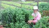 Người dân làng Vân Dương khá lên nhờ trồng hoa