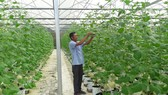 Hiện nay xã Hòa Ninh phát triển được nhiều mô hình nông nghiệp theo hướng công nghệ cao