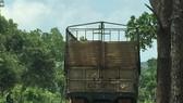 Xe chở gỗ lậu bị phát hiện trong khu vực Đồn Biên phòng Bu Cháp quản lý. Ảnh CÔNG HOAN.