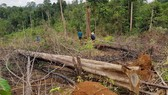 Khởi tố vụ phá 7ha rừng tự nhiên tại Lâm Đồng