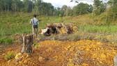 Để phá hơn 39.000m² rừng phòng hộ, phó chủ tịch xã bị đình chỉ công tác