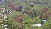 Giải toả nhiều công trình trái phép dưới tán rừng thông ở Đà Lạt