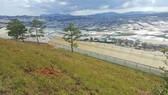 Phạt gần 190 triệu đồng 3 người cưa thông, lấn đất sản xuất ở Đà Lạt
