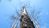 Xử lý trách nhiệm hàng loạt tập thể, cá nhân để xảy ra các vụ phá rừng lớn tại Lâm Đồng