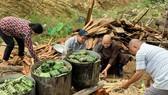 Lâm Đồng: Tất bật gói hơn 6.000 bánh chưng, bánh tét hỗ trợ miền Trung