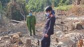 Phạt 2 đối tượng phá rừng phòng hộ tại Đà Lạt 200 triệu đồng