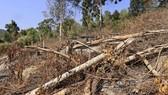 Điều tra vụ phá 3.600m² rừng phòng hộ tại Đà Lạt