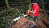 Khởi tố 14 đối tượng phá rừng ở Lâm Đồng
