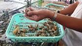 Thêm một nhà hàng hải sản tại Nha Trang bị phạt