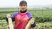 Cục trưởng Cục Trồng trọt báo cáo trồng rau lãi gần 300 triệu đồng/ha, số nhổ bỏ rất ít
