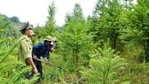 Cả nước còn 29 dự án thủy điện tương đương 900ha rừng chưa trồng thay thế