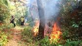 Nhiều cánh rừng đứng trước nguy cơ bị cháy