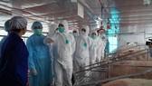Bộ trưởng Nguyễn Xuân Cường yêu cầu 17 tập đoàn giảm giá thịt heo