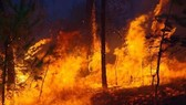 Nguy cơ cháy rừng tại các tỉnh phía Bắc và miền Trung vẫn còn rất cao